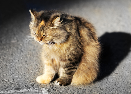 gato triste: Beautiful sad cat sits on the ground photographed close up Foto de archivo