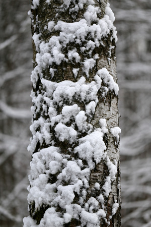 trees photography: Beautiful black and white photography trees in snow