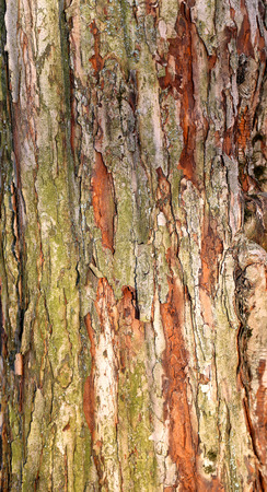 Beautiful structure of the bark of a tree photographed close up Stock Photo