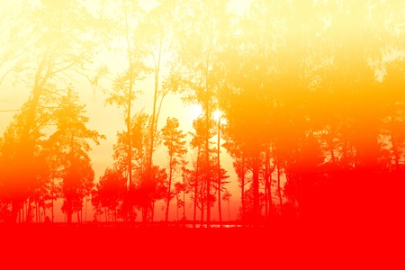 Beautiful fire forest in red tones photographed in close-up
