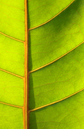 Beautiful green leaf tropical plants photographed in close-up