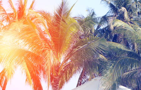 Retro photo of a beautiful of palm trees on a tropical island Stock Photo