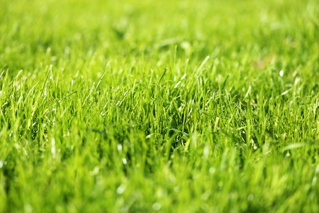 Beautiful green grass in the field to photograph close up Stock Photo
