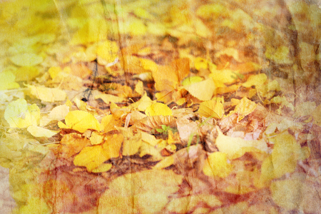 Beautiful autumn yellow leaves abstract background closeup