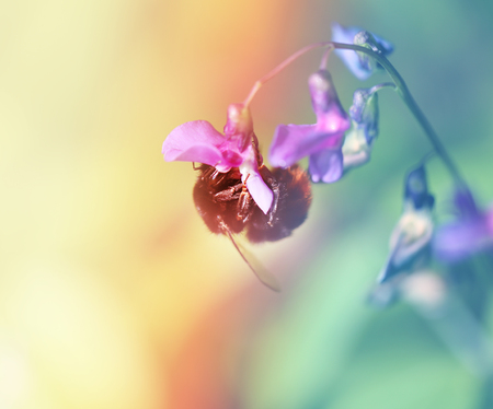 Beautiful insect bee on flower photograph close up