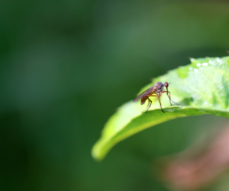 Beautiful fly sitting on a plant photographed in close-up