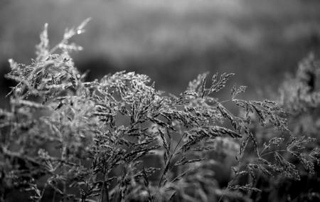 草の美しい刃は、クローズアップで撮影された露で覆われています