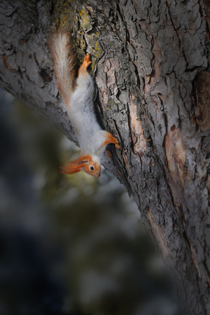 Beautiful squirrel on a tree