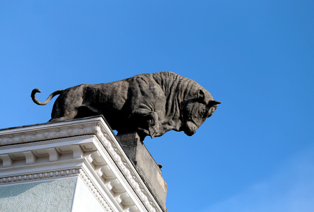 Beautiful bull against the blue sky pavilion meat-eating 写真素材