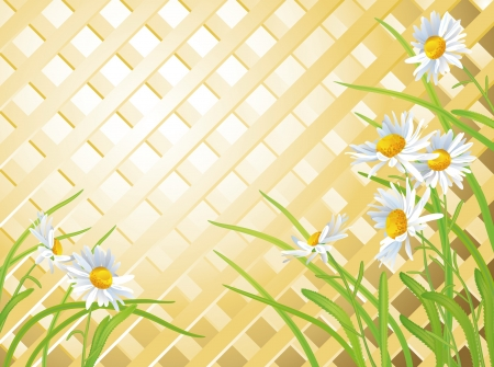 trellis: Daisies on a background of the wooden trellis with space for your text