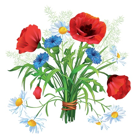 Colorful  Summer bouquet of wildflowers on a white background Vector