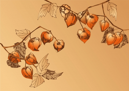 A sketch of branches with orange physalis Vector