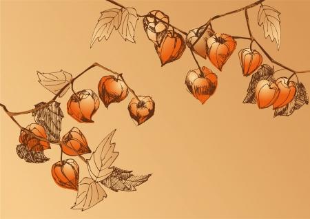 physalis: Un bosquejo de las ramas con naranja physalis