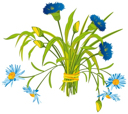 Bouquet of Field Flowers Illustration