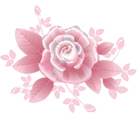 romance bed: Pink silky rose with striped petals in romantic style