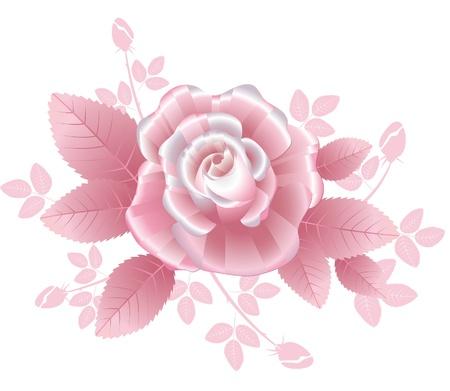 Rosa rosa con p�talos de seda de rayas de estilo rom�ntico Vectores