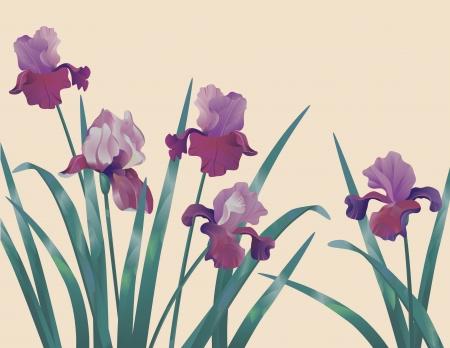 Fondo decorativo floral lila con iris Vectores
