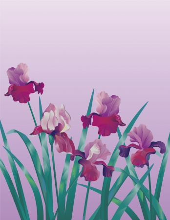 Decorative vertical floral background with lilac iris Illustration