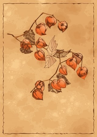 Vector sketch of the branch of orange physalis on a textured grunge autumn background Vector