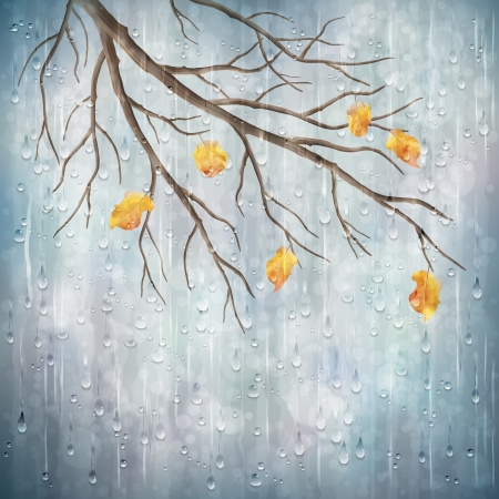 rainy season: Autumn season rainy weather artistic design  Tree branch, yellow leaves, transparent water drops on foggy gray blur natural wallpaper background  Beautiful wet autumn fall realistic vector landscape