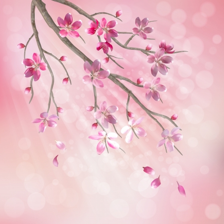 cerisier fleur: Printemps branche d'arbre de fleurs de cerisier