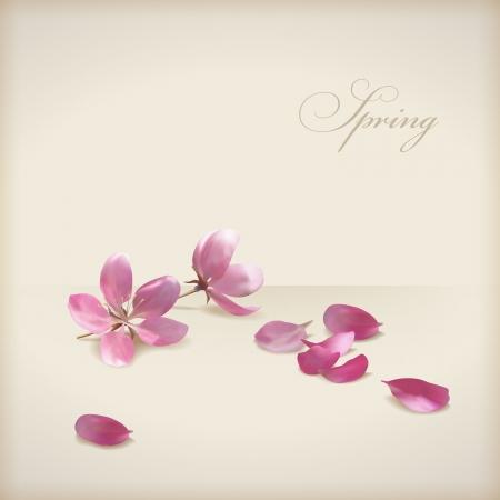 sakuras: Floral vector flores de cerezo flor de primavera dise�o rosa, p�talos de flores reci�n ca�das y texto
