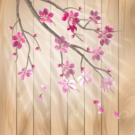springtime flowers: Spring cherry blossom flowers on a wood texture  Floral artistic vector design with beautiful pink cherry  plum  blooming flowers, tree branch, fall petals, sun rays, light effect on a wooden fence