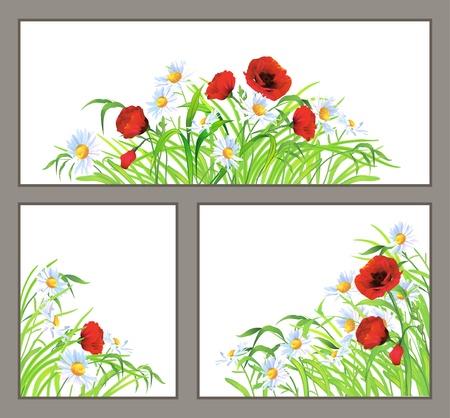 fiori di campo: Set di fiori di estate rosso papavero, margherita, camomilla ed erba verde isolato su sfondo bianco Angolo floreale e ?entral orizzontale composizioni vettore confine di elementi di design di bellezza in natura