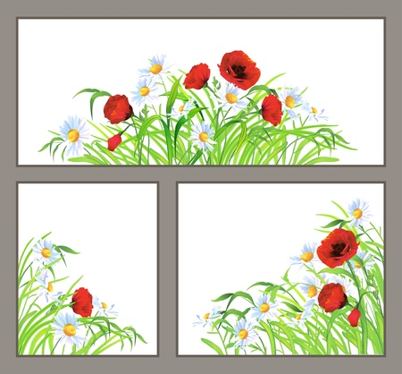 Set of summer flowers  red poppy, daisy, chamomile  and green grass isolated on white background  Floral corner and сentral  horizontal  compositions  Vector border design elements  Beauty in nature