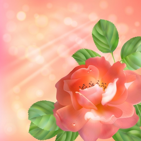 dewdrops: Background with a pink flower  rose , leaves, dewdrops, sun rays and blur  Floral artistic design