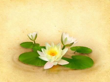 Tarjeta floral con dibujo hermoso lirio de agua en el fondo de textura de papel viejo en el estilo vintage para el dise�o perfecto de la boda, felicitaci�n o invitaci�n