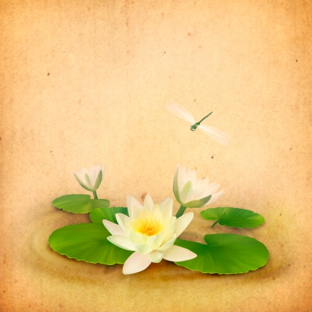 Floral aquatic card with water lily  lotus  and dragonfly drawing on textured old paper background in vintage style photo