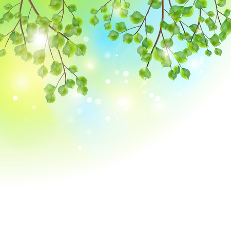 Green leaves, tree branches, vector summer background  Birch border foliage on colorful sunny sky backdrop