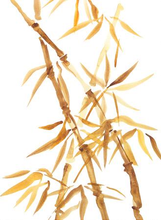 Asian-Aquarell von Bambus. Original chinesischen Stil Aquarell-Zeichnung auf weißem Hintergrund Standard-Bild - 27508643