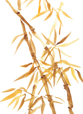 Asian watercolor painting of bamboo. Original Chinese style aquarelle drawing on white background photo