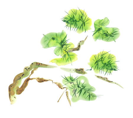Asian watercolor painting of pine tree. Original Chinese style aquarelle drawing on white background photo