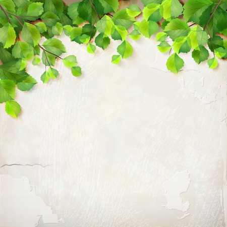 delicate: Vector season background with tree branches, green leaves, decorative white plaster wall backdrop with subtle delicate grunge texture of surface