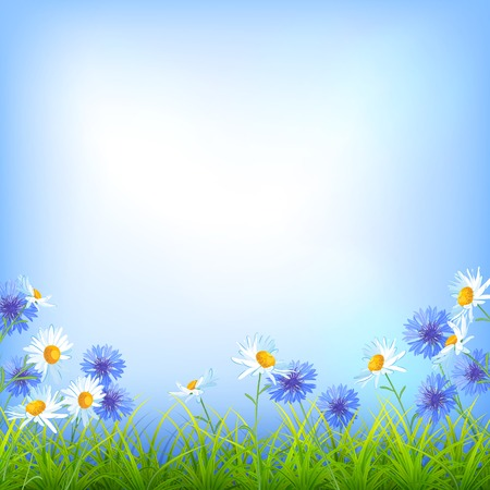 verdant: Vector field flowers (daisy, cornflower), blue sky, green grass summer day natural  background