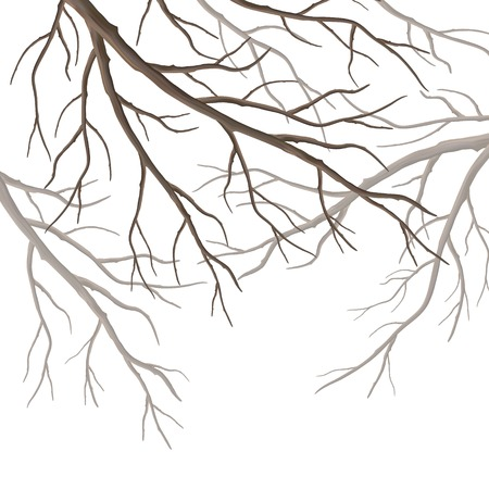 lonely tree: Realistic tree branches silhouette isolated on white background Illustration
