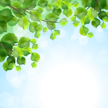 Green leaves, tree branches, vector summer background  Birch border foliage on blue sky backdrop