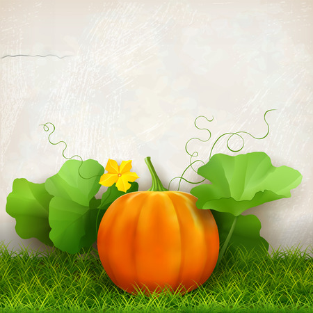 thanks giving: Big orange pumpkin,  leaves, grass against the background of a plaster wall