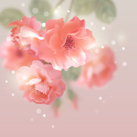 dewdrop: Shining vector flowers roses romantic floral background