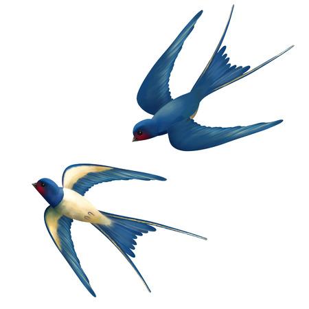 volar: Vector dos golondrinas que vuelan en el fondo blanco Vectores