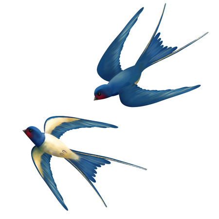 Vector two flying swallows on white background