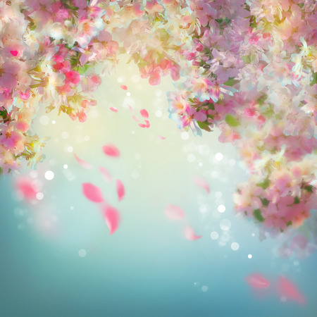 Spring cherry blossom background with falling petals
