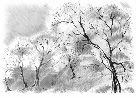 pictorial art: Sketch of the trees isolated on white. Digital drawing