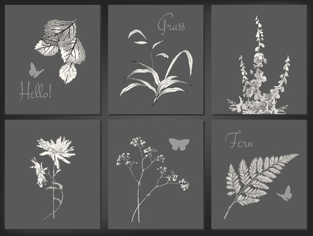 fern leaf: Set of vector floral greeting cards or romantic labels with drawing flowers, grass Illustration