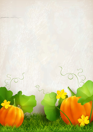 plaster wall: Big orange pumpkin, leaves, grass against the background of a plaster wall. Thanksgiving vector card.