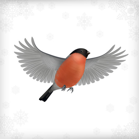 christmas robin: Winter vector Christmas card with flying bird bullfinch