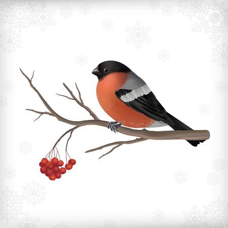 rowan tree: Vector Christmas card with bird bullfinch, Rowan berry tree branch